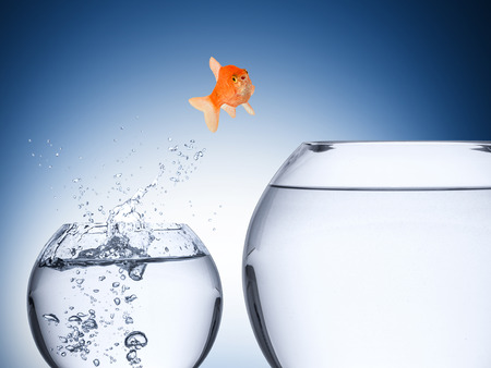goldfish jump: fish rise concept