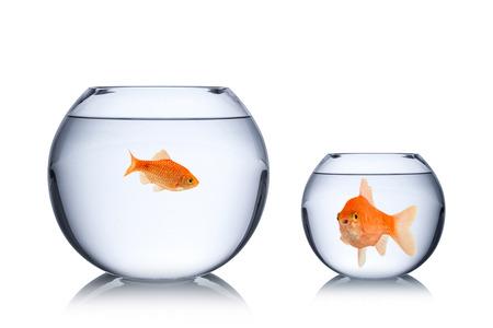 fish social envy concept Standard-Bild