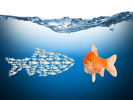 trabajo en equipo: conecpt el trabajo en equipo con los peces Foto de archivo