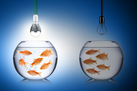 turnaround: LED energy concept with fishs