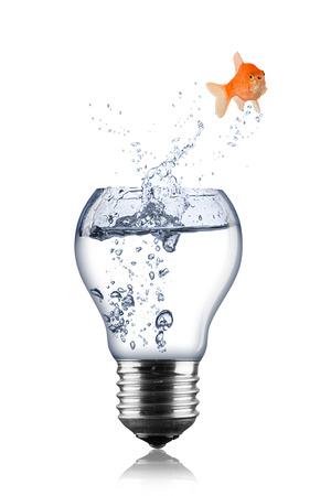 fish lightbulb concept