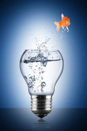thinkers: fish lightbulb concept