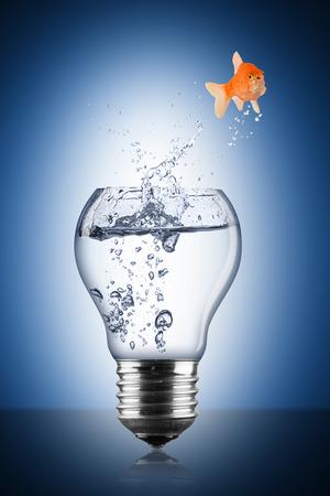 turnaround: fish lightbulb concept