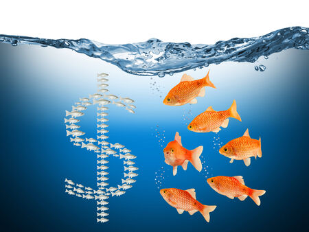 yaw: fish speculation concept with dollar symbol