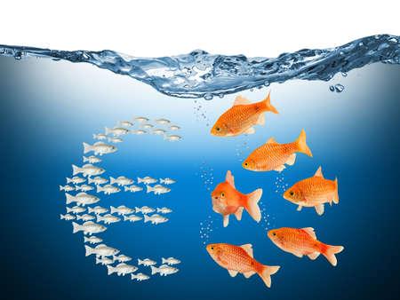 yaw: gegen den Strom Fischkonzept