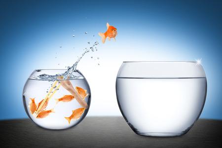 fishtank: fishes in a slingshot teamwork concept