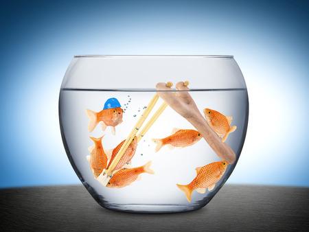 business change: Fische mit Steinschleuder im Goldfischglas
