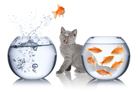 astonished cat watches impossible fish jump