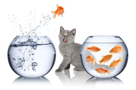 goldfishes: gatto stupito orologi impossibile salto di pesce Archivio Fotografico