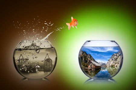 life change: fish rethink and change concept Stock Photo