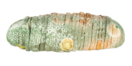 moldy: moldy bread on white background Stock Photo