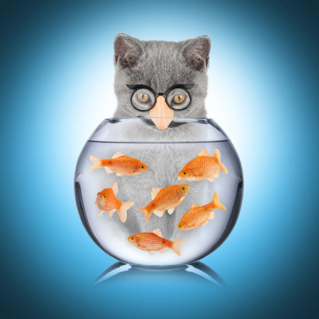 con man: cat with false nose looking into fish bowl Stock Photo