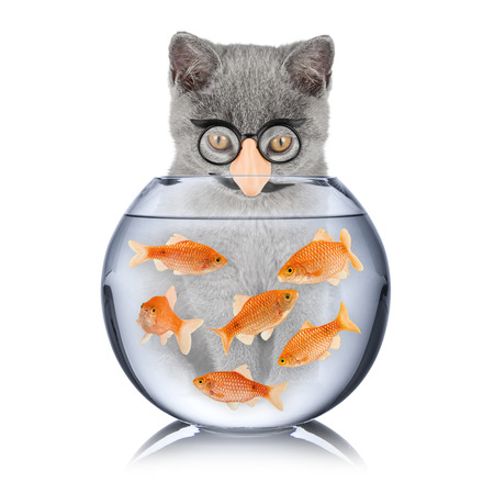 cat with false nose looking into fish bowl Stock Photo