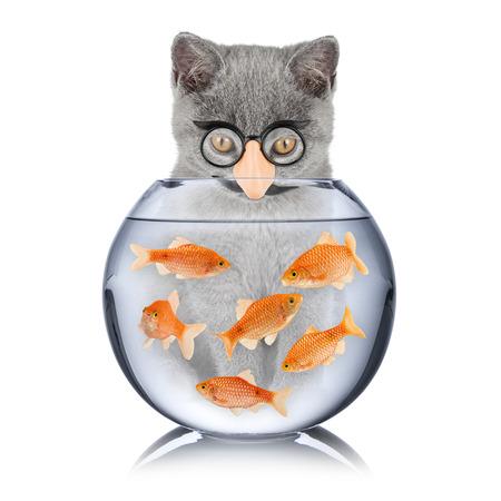 insidious: cat with false nose looking into fish bowl Stock Photo