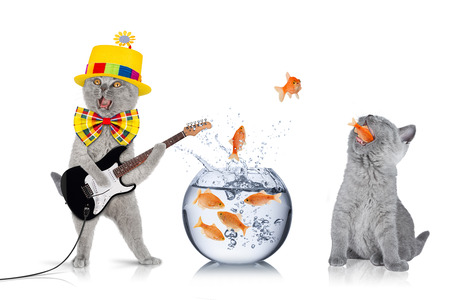 fish bowl: teamwork concept with cats and fish bowl Stock Photo