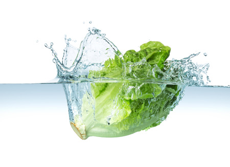 head of lettuce splashes into the water