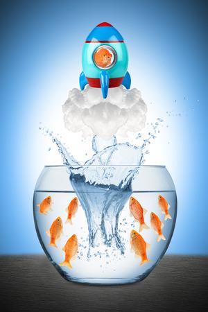 Vis verlaten vis kom met rucola Stockfoto - 37734784