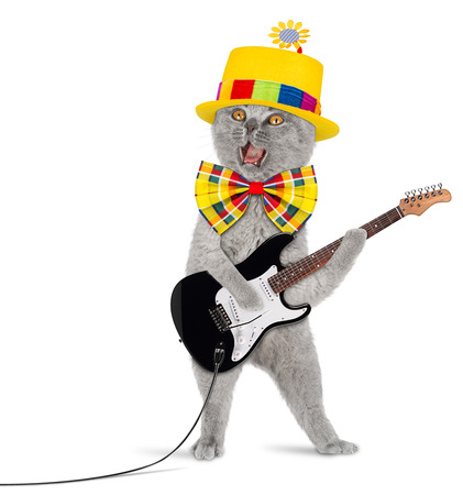 koty: Kot z gitarą i śmiesznym kapeluszu Zdjęcie Seryjne
