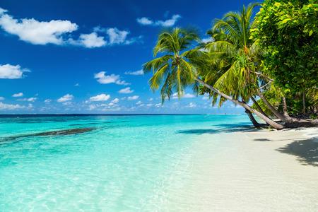 パラダイスビーチのココ ・ パームズ 写真素材