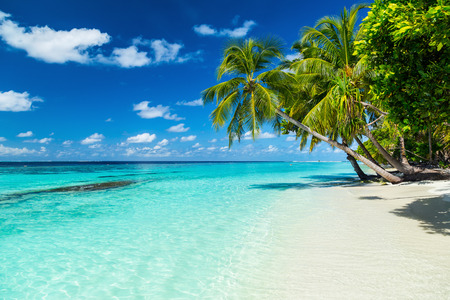 Kokospalmen am Paradiesstrand Standard-Bild - 42736322
