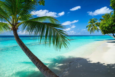 coco bokst op paradise beach