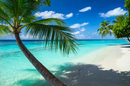 Kokospalmen am Paradiesstrand Standard-Bild - 42736628