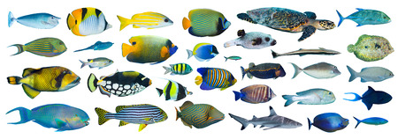 parrotfish: collection of tropical fishes on white background