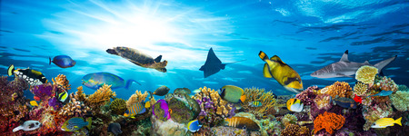 colorful coral reef with many fishes and sea turtle 스톡 콘텐츠