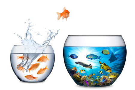 goldfish escape concept with big coral reef fishbowl Imagens