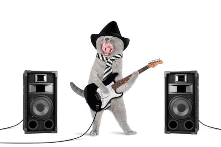 funny rock star cat with guitar and speakers on white background Stockfoto