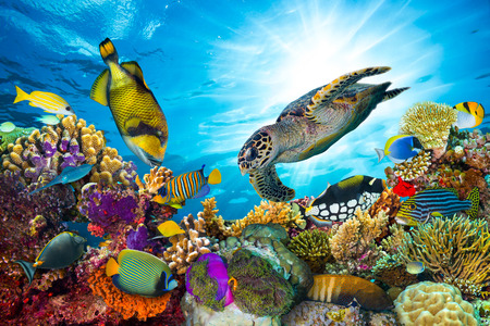 colorful coral reef with many fishes and sea turtle Фото со стока