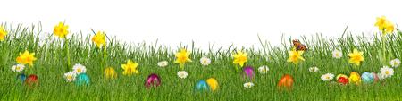 huevo blanco: colorido prado con narcisos sobre fondo blanco