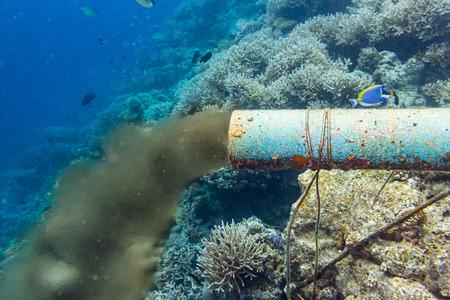 sedimentation: underwater sewer pipe in coral reef