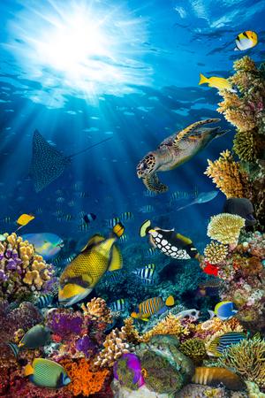 カラフルな魚や海洋生物と深い青色の海でサンゴ礁の水中風景