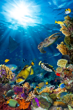 red coral colony: underwater coral reef landscape in the deep blue ocean with colorful fish and marine life