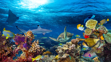 underwater coral reef landscape 16to9 background  in the deep blue ocean with colorful fish and marine life Stock Photo - 73528243