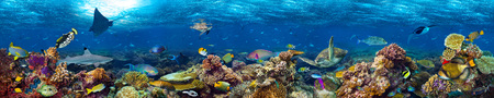 underwater coral reef landscape super wide banner background  in the deep blue ocean with colorful fish and marine life Stock fotó - 73528360