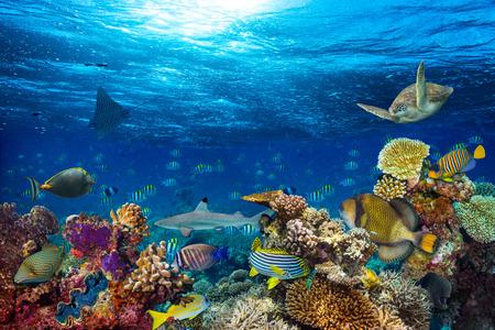 カラフルな魚や海洋生物と深い青色の海で水中サンゴ礁景観背景