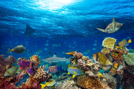 underwater coral reef landscape background  in the deep blue ocean with colorful fish and marine life Standard-Bild