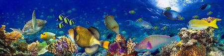 Unterwasser-Korallenriff Landschaft breiten Panorama-Hintergrund in den tiefen blauen Ozean mit bunten Fischen und marine Leben