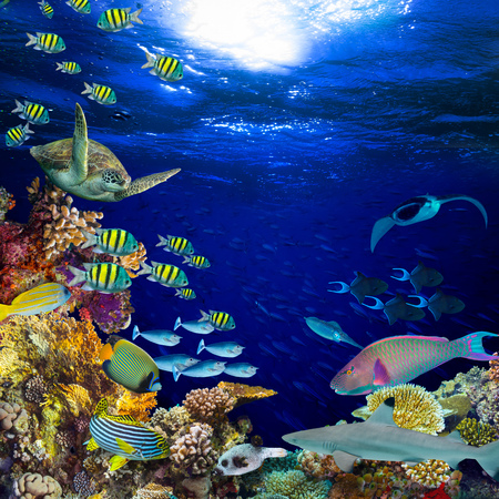 underwater coral reef landscape square quadratic background  in the deep blue ocean with colorful fish and marine life