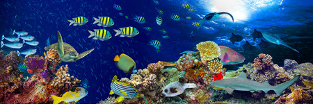 underwater coral reef landscape wide panorama background  in the deep blue ocean with colorful fish and marine life Foto de archivo