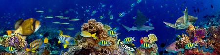 paysage de récif de corail sous-marin dans l'océan bleu profond avec des poissons colorés et la vie marine fond d'écran panoramique grand format