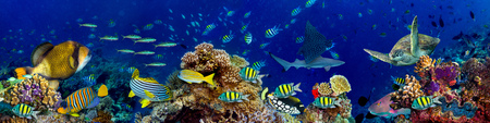 underwater coral reef landscape in the deep blue ocean with colorful fish and marine life wide format panorama background wallpaper Banque d'images - 102697477