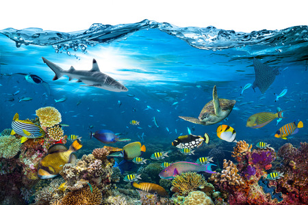 underwater paradise background coral reef wildlife nature collage with shark manta ray sea turtle colorful fish with wave in front isolated on white background