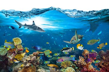 Unterwasserparadies Hintergrund Korallenriff Tierwelt Natur Collage mit Hai Mantarochen Meeresschildkröte bunter Fisch mit Welle vorne isoliert auf weißem Hintergrund Standard-Bild