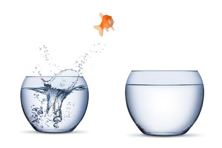 Pez dorado cambiar movimiento oportunidad de carrera concepto de aumento saltar a otro recipiente más grande aislado sobre fondo blanco Foto de archivo