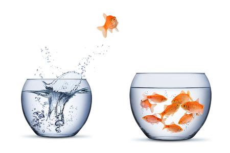 Pez dorado cambiar movimiento retrun separartion concepto de trabajo en equipo familiar saltar a otro recipiente más grande aislado sobre fondo blanco. Foto de archivo