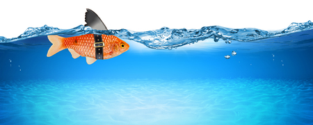 goldfish with fake shark fin creative business idea innovation concept isolated on blue panorama underwater background Zdjęcie Seryjne