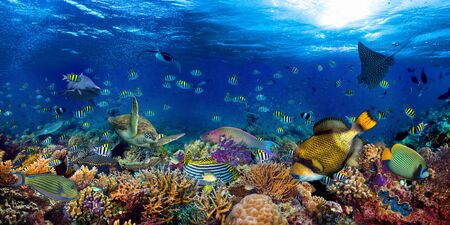 underwater coral reef landscape wide 2to1 panorama background  in the deep blue ocean with colorful fish sea turtle and marine wild life